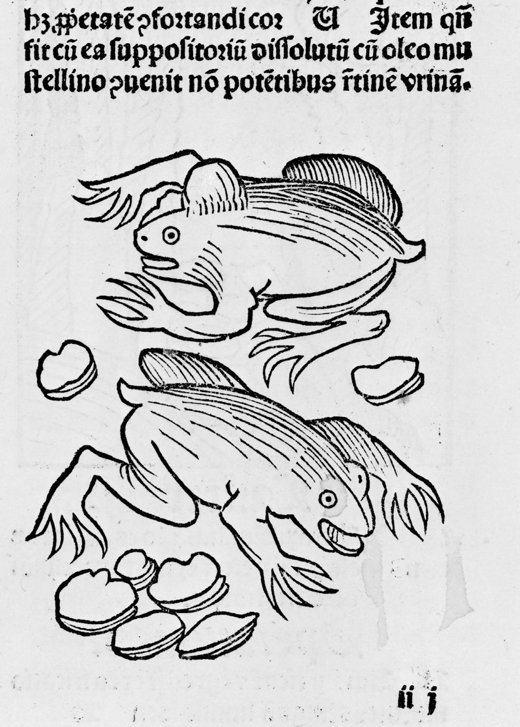 [Illustrations_de_Hortus_Sanitatis]___[...]Cuba_Johannes_btv1b2100001h_9